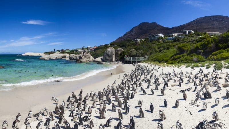 Boulders Beach in Californië