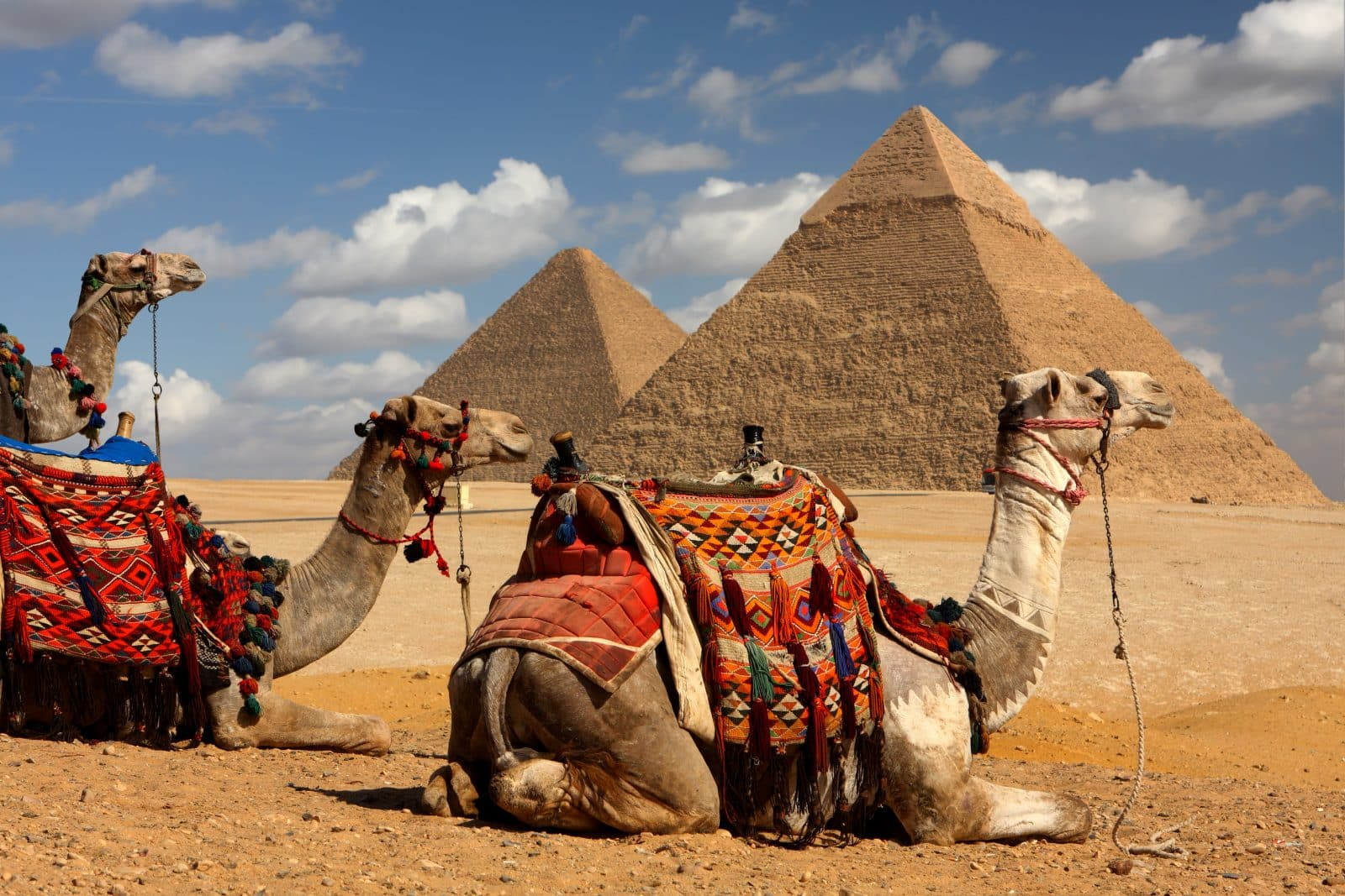 Piramides en kamelen in Egypte